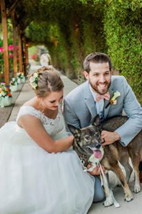 real bride series dog ringbearer